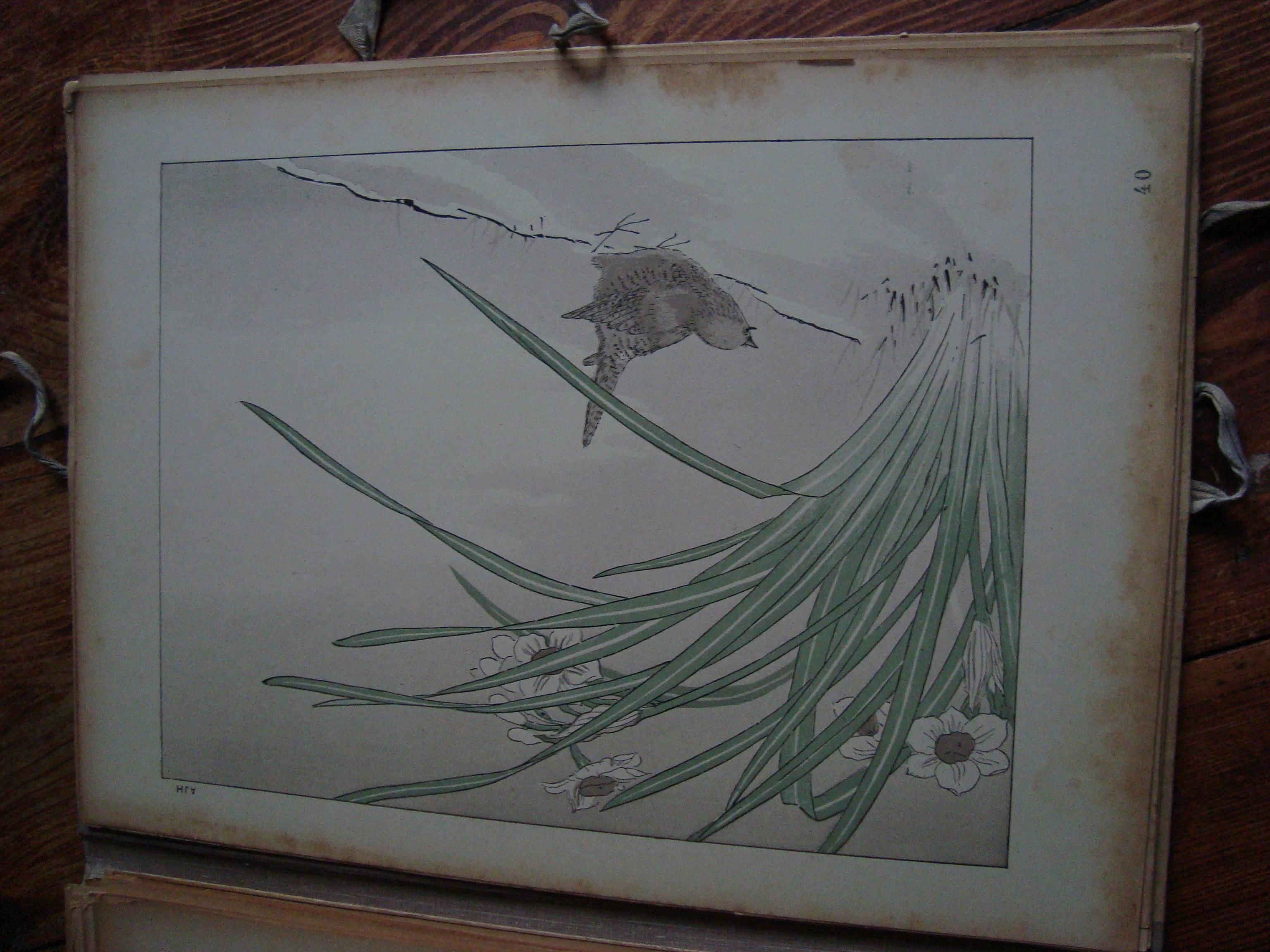 Collectif documents japonais 50 planches d 39 art japonais for Plante 9 chemises